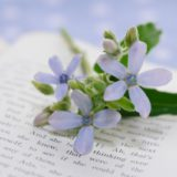 英語のテキストとお花